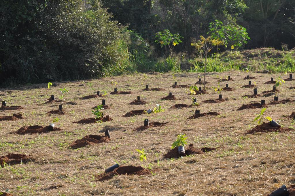 Saev Ambiental planta mais de 40 mil árvores