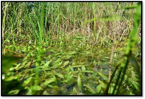 Ação de recuperação ambiental de nascentes é promovida através da Prefeitura e Saev Ambiental