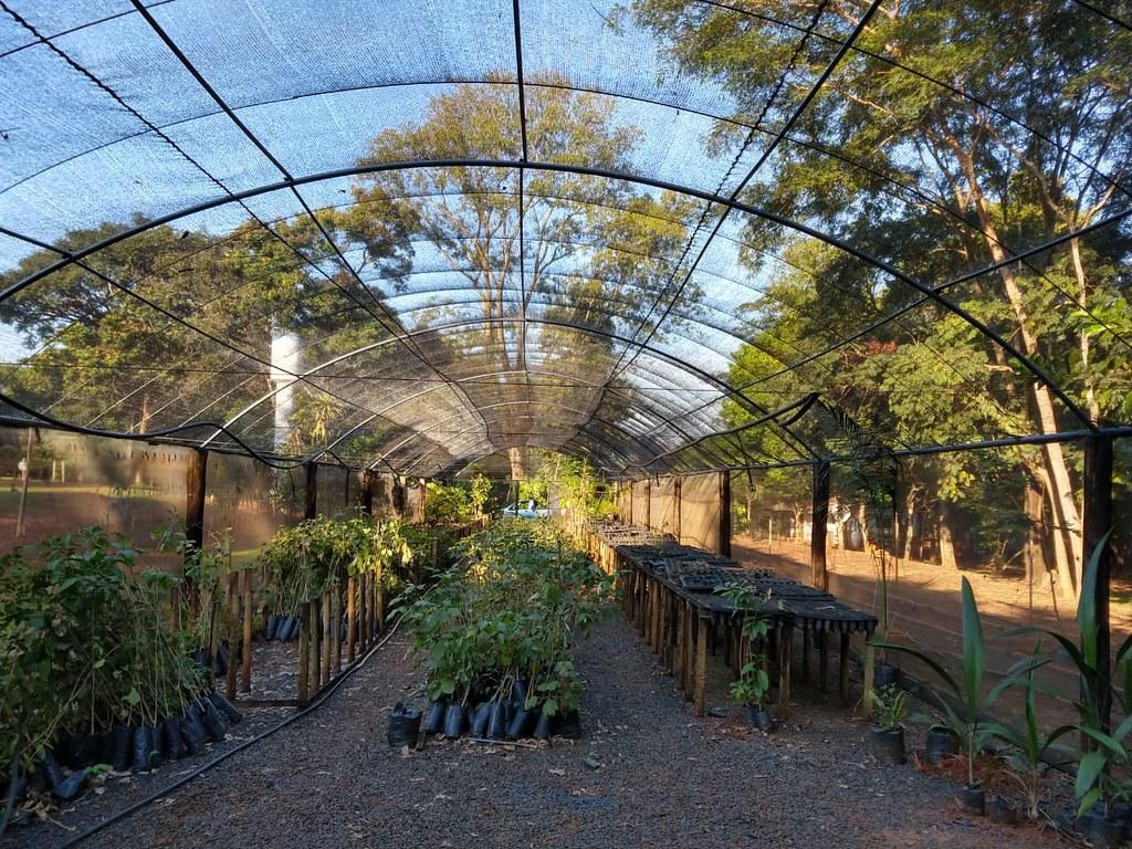 Saev Ambiental reforma Viveiro de Mudas do projeto Disque Árvore