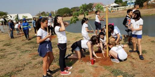 Saev Ambiental intensifica plantios em espaços públicos