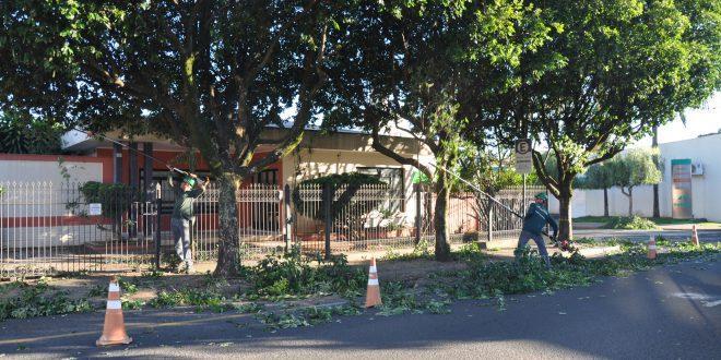 Saev Ambiental realiza quase 30 mil podas gratuitas de árvores